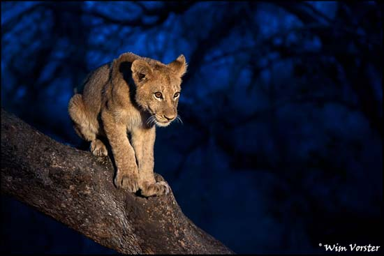 Interview with Wildlife Photographer Wim Vorster