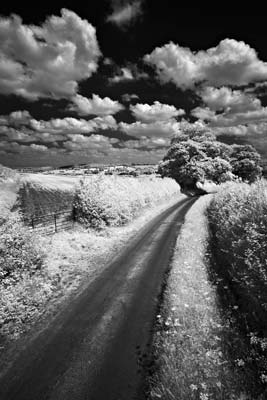 How to Take Infra Red Photos