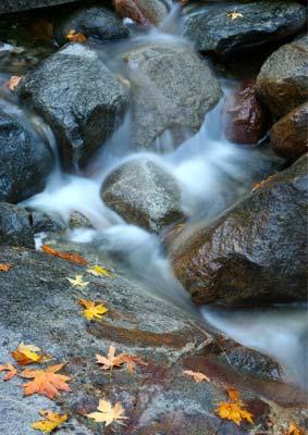 How to Take Great Autumn Photos