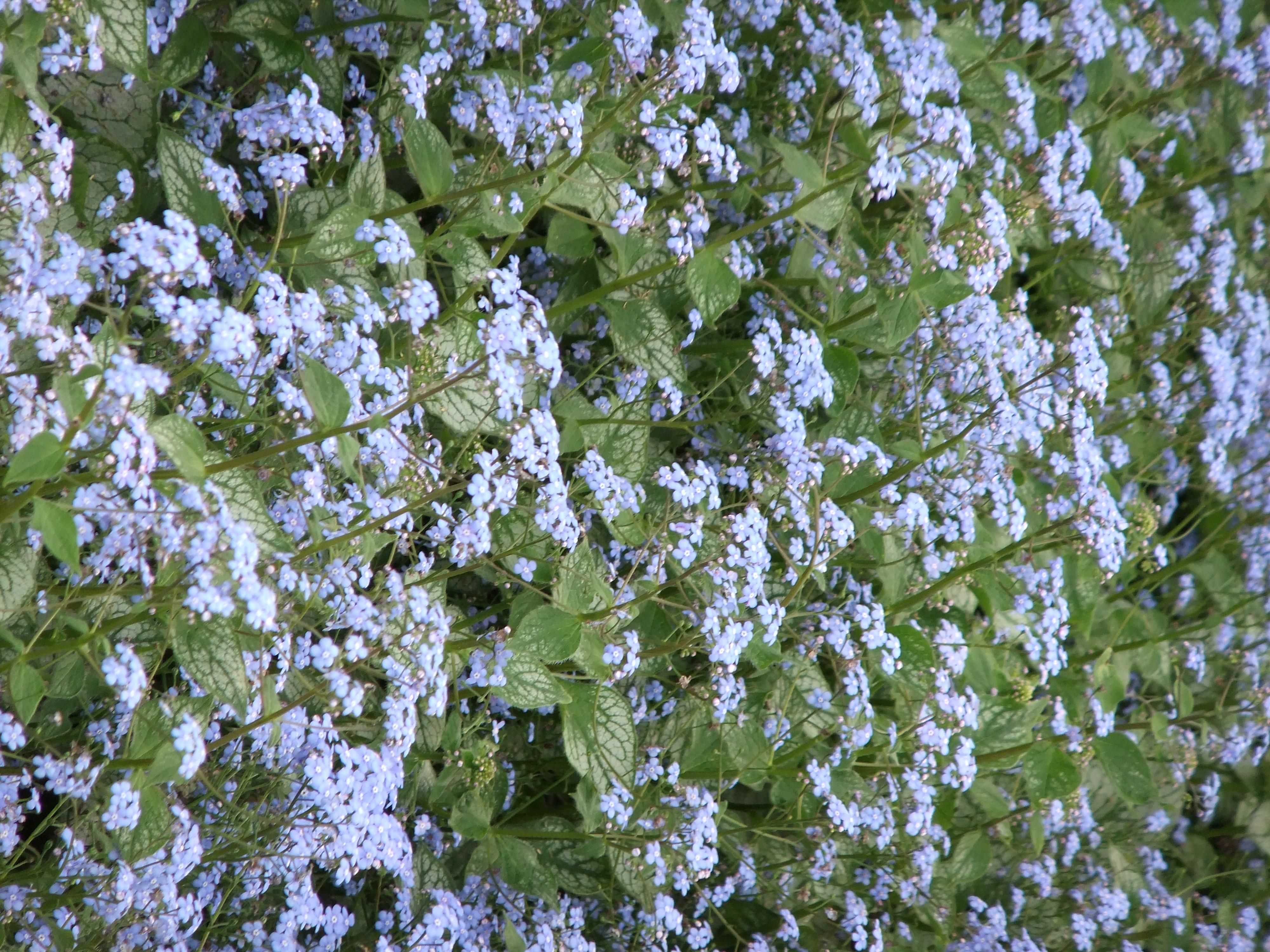 http://img.photographyblog.com/reviews/fujifilm_finepix_f80exr/sample_images/fujifilm_finepix_f80exr_37.jpg