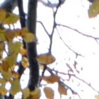 Leica Elmarit-TL 18mm f/2.8 ASPH