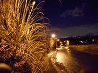 night_auto_isoauto.jpg