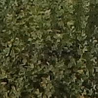 sharpenedCrop1.jpg