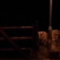 night_program1.jpg