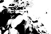 pictureeffectposterizationbw.JPG