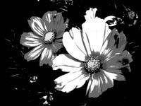 Sony_Cyber-shot_WX500-Picture_Effect04-Posterization-B_W.jpg