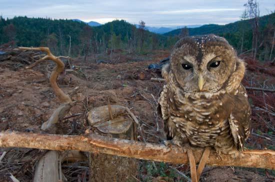 An Interview with Wildlife Photographer Joel Sartore