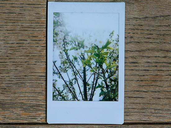 Fujifilm Instax Mini 40 Sample Photo