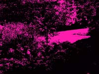 Pentax_XG-1-digital_filter06-Punk.JPG
