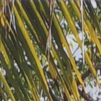 Sony_SELP28135G-sharpness-135mm-f4-centre_crop.jpg