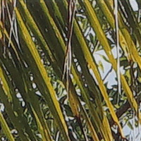 Sony_SELP28135G-sharpness-28mm-f16-centre_crop.jpg
