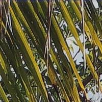Sony_SELP28135G-sharpness-28mm-f4-centre_crop.jpg