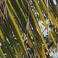 Sony_SELP28135G-sharpness-28mm-f5_6-centre_crop.jpg