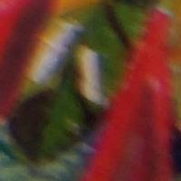 Sony_SAL2470Z2-sharpness-24mm-f5_6-edge_crop.jpg